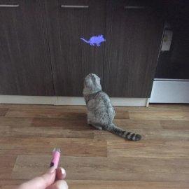 Hračka pro kočky - Laserové ukazovátko s obrázkem myši / klíčenka /Poštovné ZDARMA!