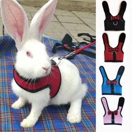 Harness with leash for rabbits / FREE Shipping!